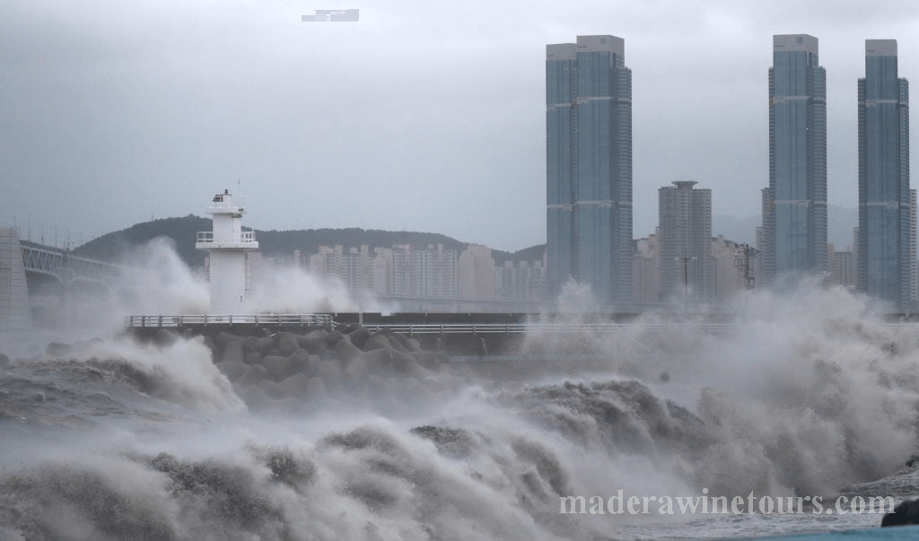 พายุไต้ฝุ่น ไห่เซินเข้าถล่มทางเหนือ ของเมืองปูซานของ เกาหลีใต้ในเช้าวันจันทร์และกำลังพัดเข้าบ้านและโรงงานทำให้โค่นต้นไม้ล้มลงหลายต้นไม้